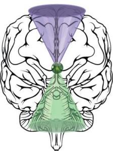 El Cerebro Integral