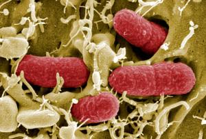 как ученые создают синтетическую ДНК