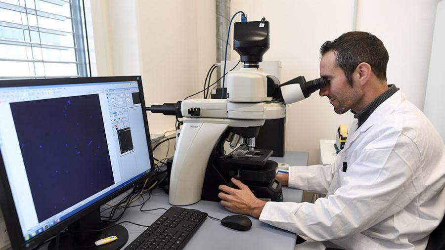 Биологи обнаружили управляющие своими жертвами вирусы