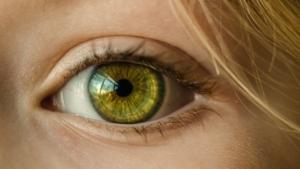 Нет слепоте: биологи разблокировали систему природного восстановления зрения