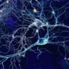 В головном мозге человека зафиксирован неизвестный тип сигнала